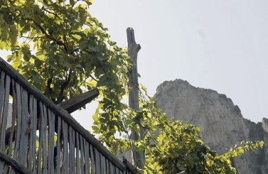 Capri has been growing grapes for more than 2,000 years.
