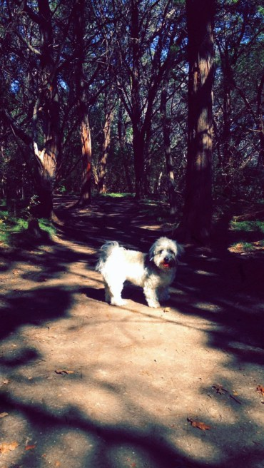 Mateo enjoying our hike