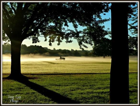 365 cricket pitch