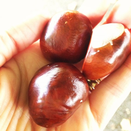 conkers in hand