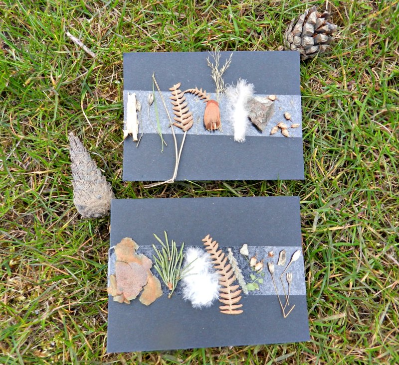 Collecting Cards, Nature Trail