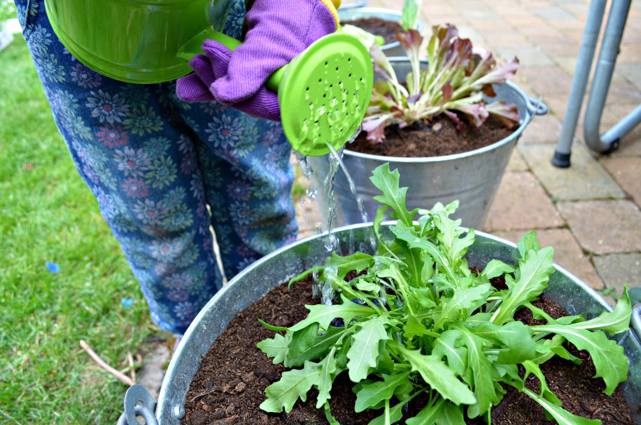 Seedlets review Gardening with children
