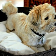 Is Owning A Pet Good For Your Health