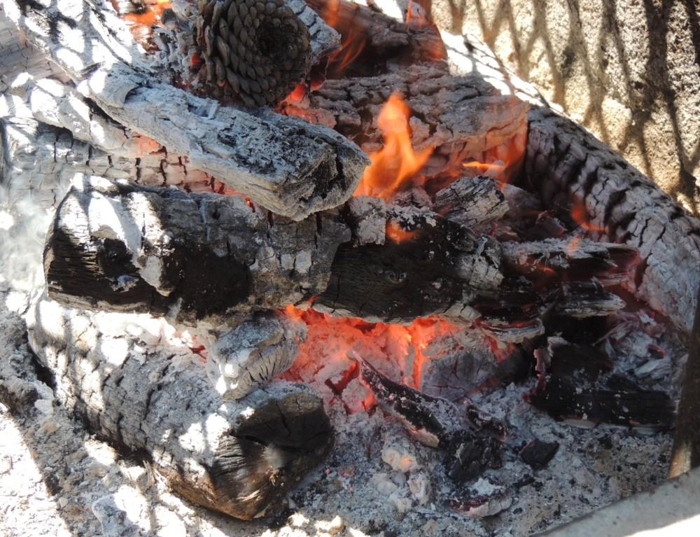 A hot red oak fire