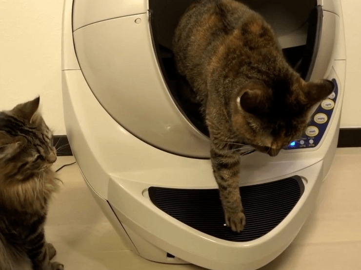 Best Self Cleaning Litter Box For Multiple Cats