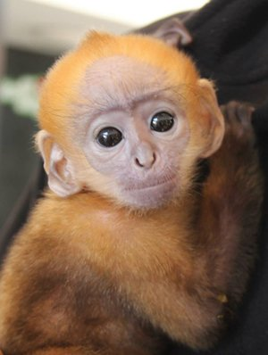 A 'little star' is born at Belfast Zoo | The Animal Facts