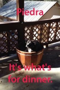 Ally's dog meme