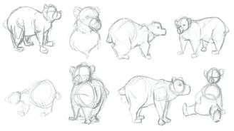 bear_body_shapes