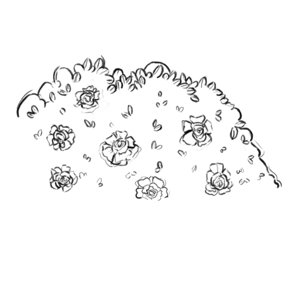 Plant_04_Lines