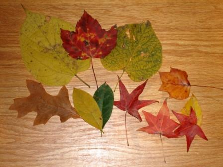 Autumn Savoring (4/6)