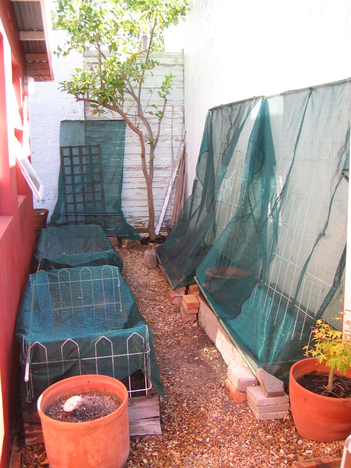 Veggie garden in cat exclusion mode! Of course in summer the shade netting will also help to keep out the scalding sun.
