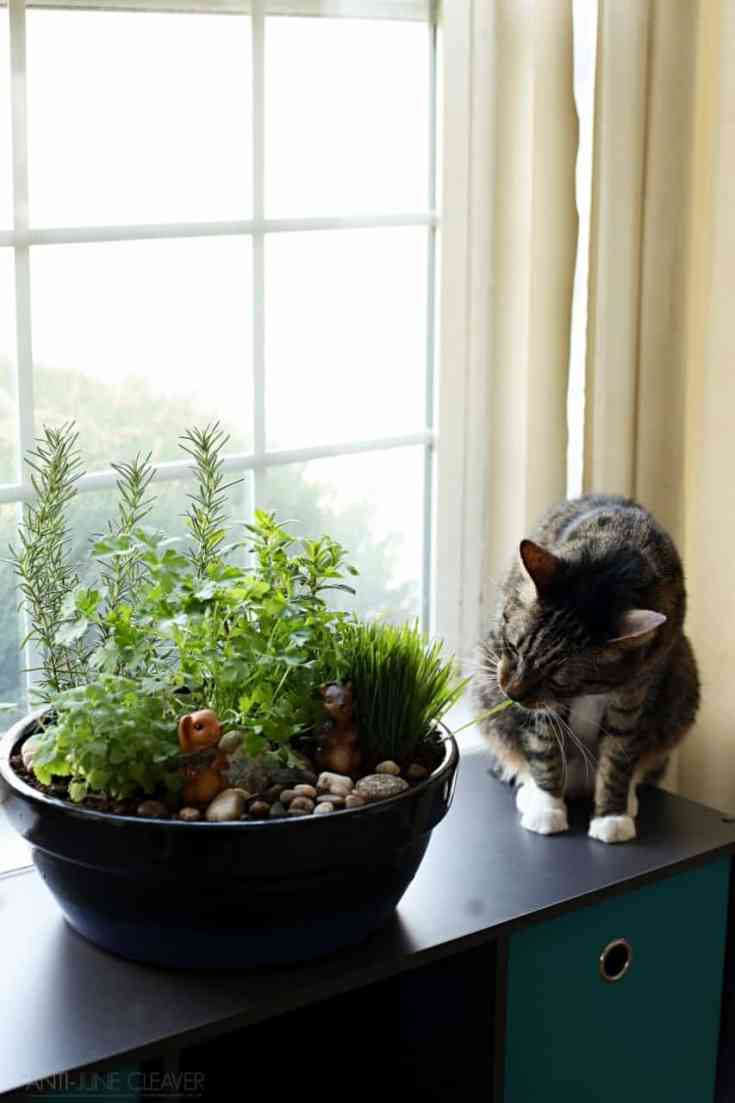 How to make an amazing diy indoor cat garden the anti for Indoor gardening with cats