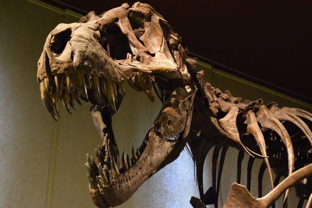 Colorado Springs Museum Of Natural History