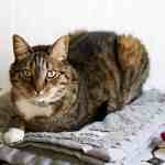 10 Ways You and Your Kids Can Help Shelter Cats