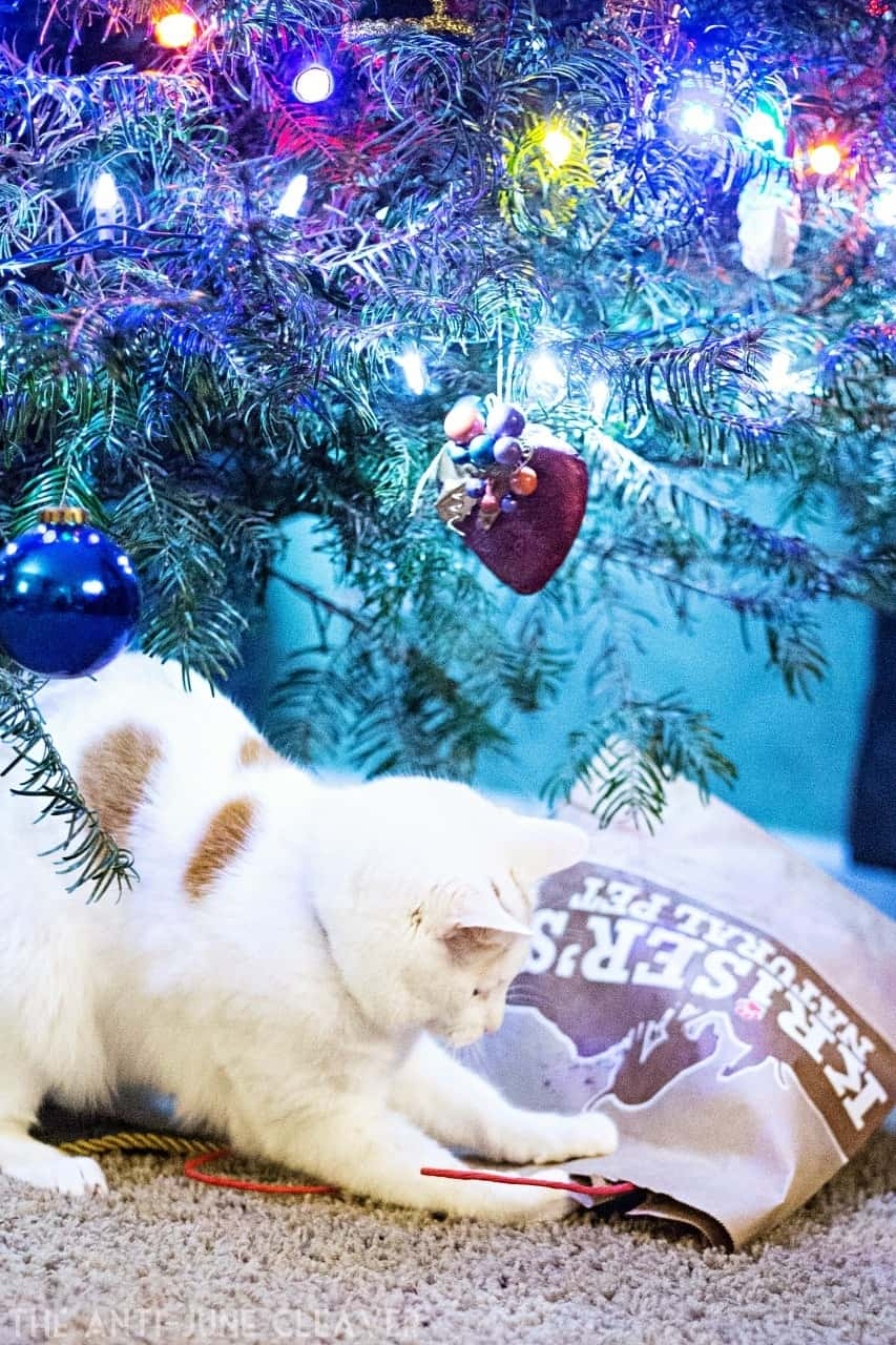 How to Keep Your Cats Safe Over the Christmas Holidays | The Anti ...