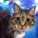 Tips to Keep Cats Safe Over the Christmas Holidays {and How to Spoil Them}