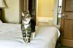 Moving Long Distance with Cats is Easier than You Think