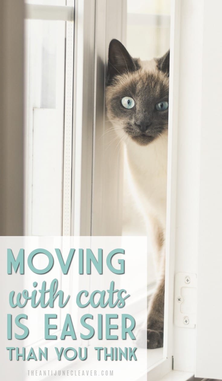 How to Move Long Distance with Cats. Moving or traveling with cats is much easier than you think! #moving #travel #cats #movingwithcats #travelwithcats @reganajc