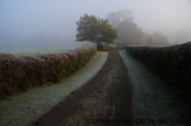 The drive in winter frost