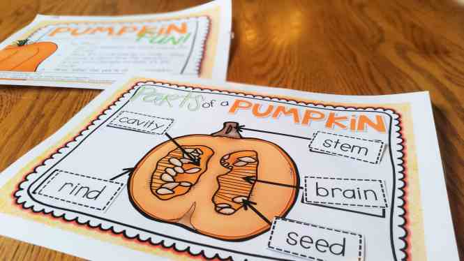Parts of a Pumpkin diagram center