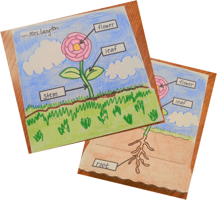 Plant diagram- love how you can fold down the diagram to show the parts of the plant that is below the soil! TheAppliciousTeacher.com