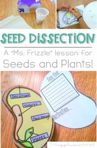 Seed dissections- love this idea for a plants and seeds unit! Hands on, engaging, and FUN! TheAppliciousTeacher.com #seedactivities #plantactivities #2ndgrade #2ndgradescience