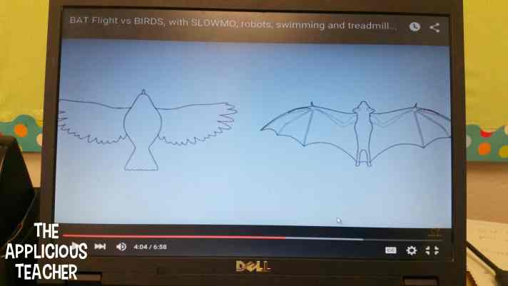 bat vs. birds video