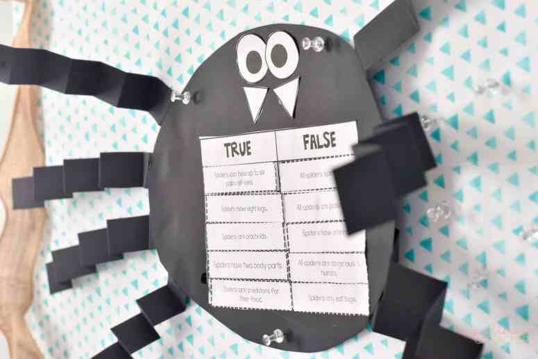 spider craft using true and false statements
