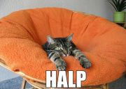 Can has halp?