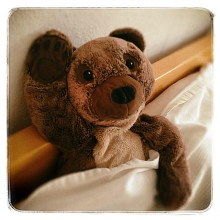 bear awake