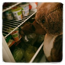 bears breakfast in the fridge