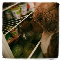 bears breakfast in the fridge