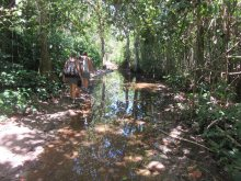 Marshy walking trail at times