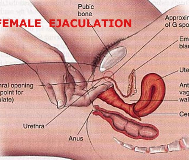 Female Ejaculation Sexual Anatomy