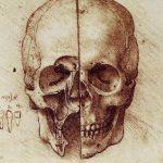 Skull - Practical Anatomy