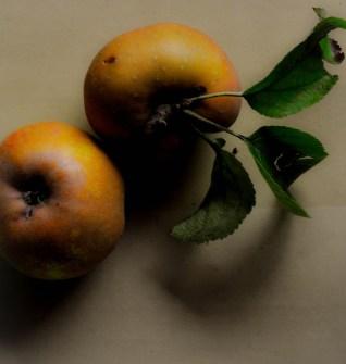 Apples golden 6