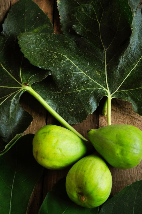 Figs and leaves 4