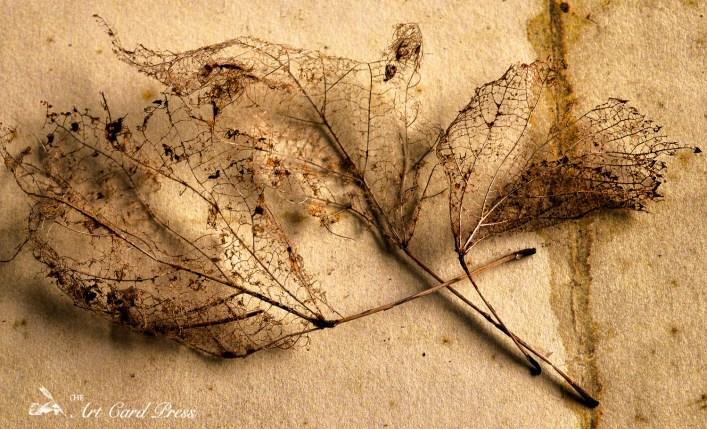 Ghost leaves 11