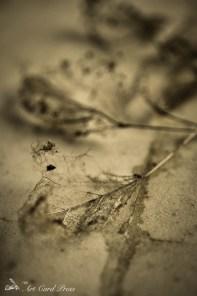 Ghost leaves 5