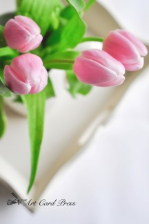 Pink Tulips 4-001