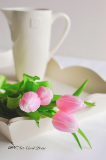 Pink Tulips 6-001