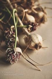 Garlic & Flowers 12