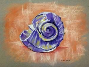 Seashell by Loran Tsang
