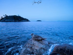 Blue Hour by Jaspreet Sidhu