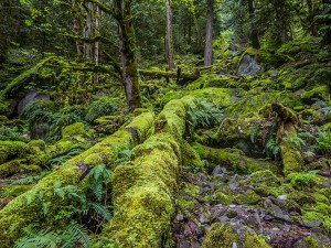 Rain Forest by Vicki Legere