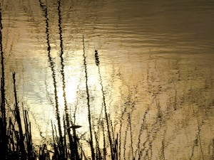 Rippled Reflection by Vickie Legere