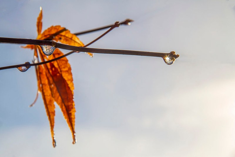 The Last Leaf by Vickie Legere