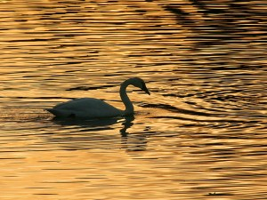 Sunset Silhouette by Vickie Legere