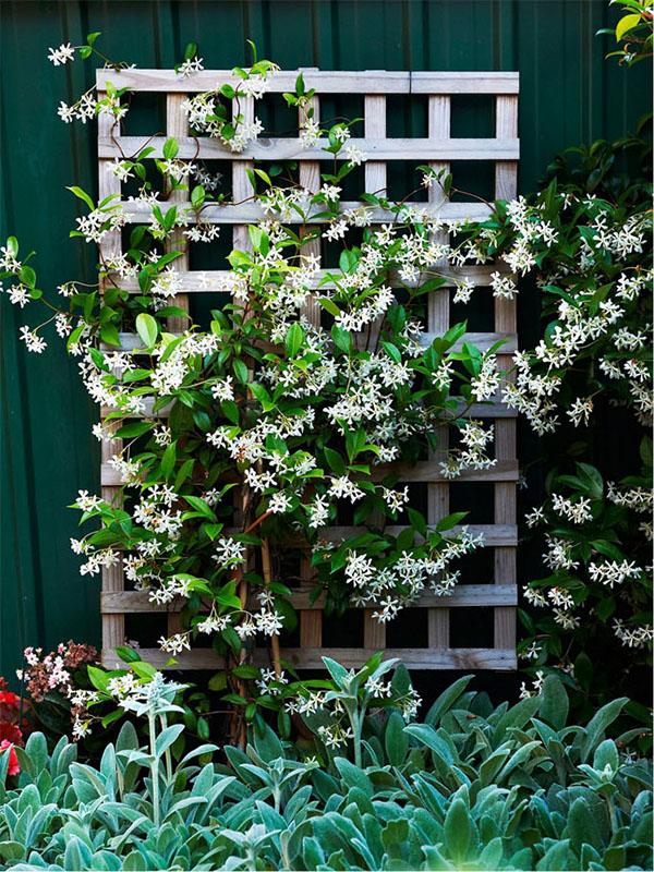 Exterior Pots Plants