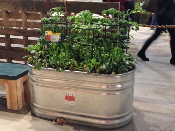 Galvanized Vegetable Planters